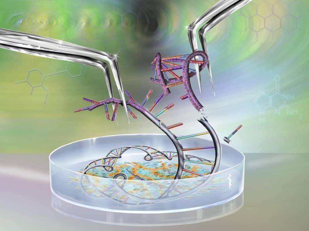 vie ciseaux génétiques